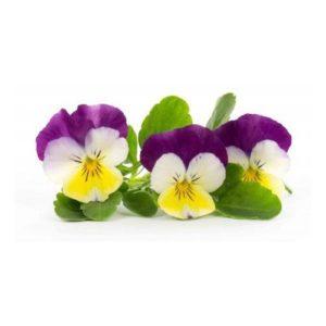 BIO Maceška pro chytré květináče VÉRITABLE® - LINGOT®