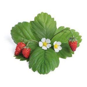 BIO Lesní jahoda červená pro chytré květináče VÉRITABLE® - LINGOT®